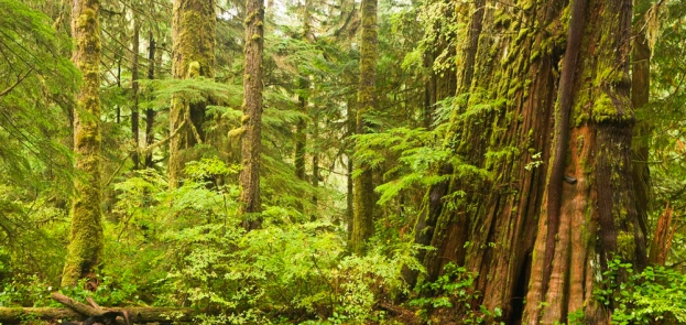 Temperate_Rainforest