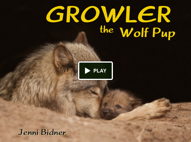 Growler the wolf pup eco books 4 kids for Jenni wolf