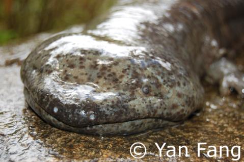 Image-1-Salamander_resized