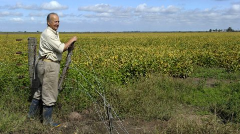Drought resistant soy strains
