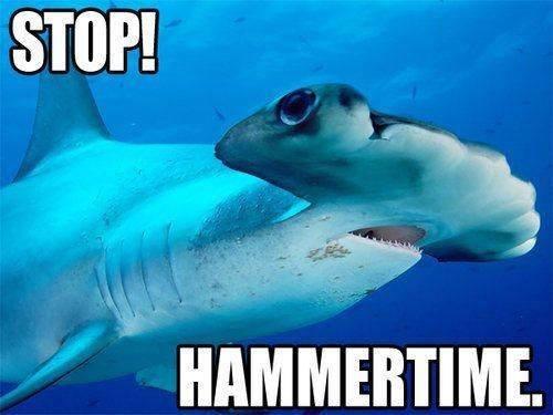 Shark Week – 10 fun facts on sharks | Eco Books 4 Kids