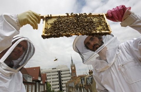 London Bee Keepers unsuccessful
