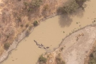 From 300 meters above, a drone keeps an eye on elephants