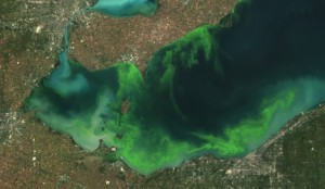 This satellite image provided by NOAA shows the algae bloom on Lake Erie in 2011 which according to NOAA was the worst in decades