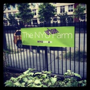 nyu urban farm